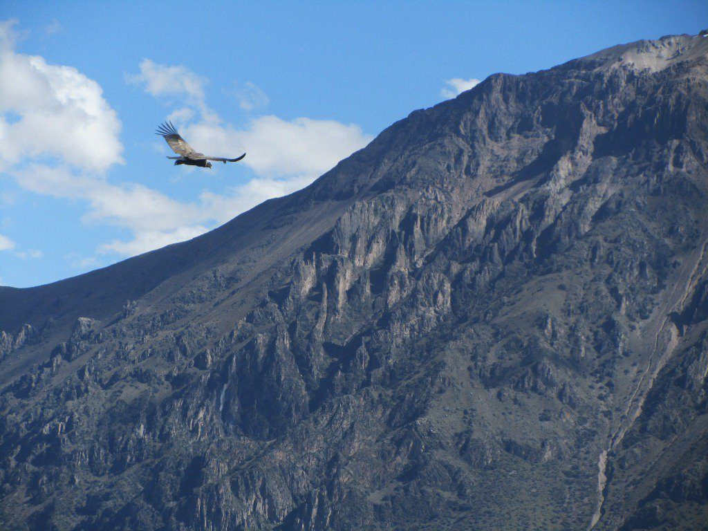 5 Days in Arequipa - Colca Canyon Condors