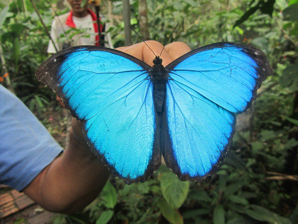 Trip to Iquitos - Butterfly Farm