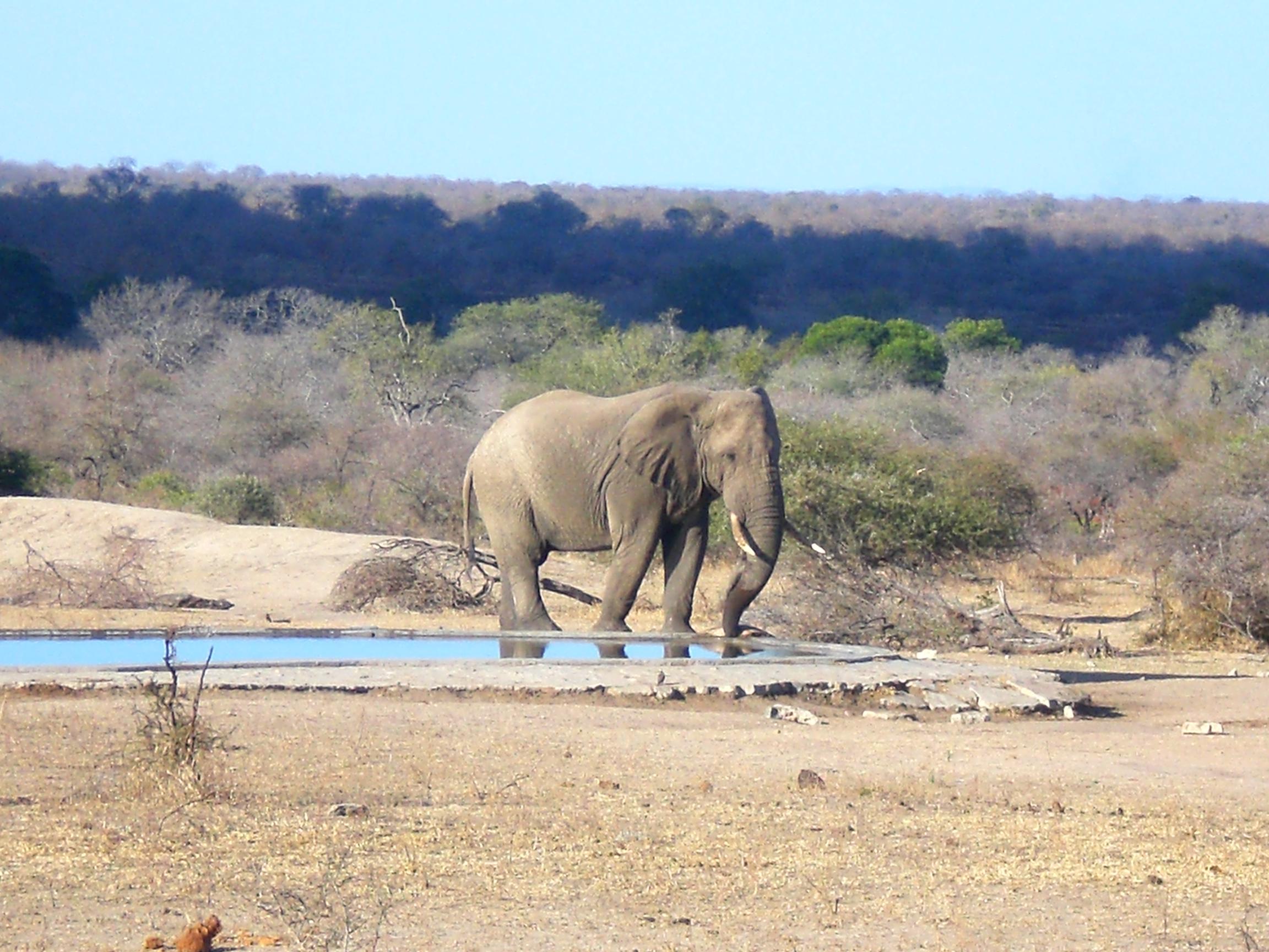 Backpacking in South-Africa - Krugerpark