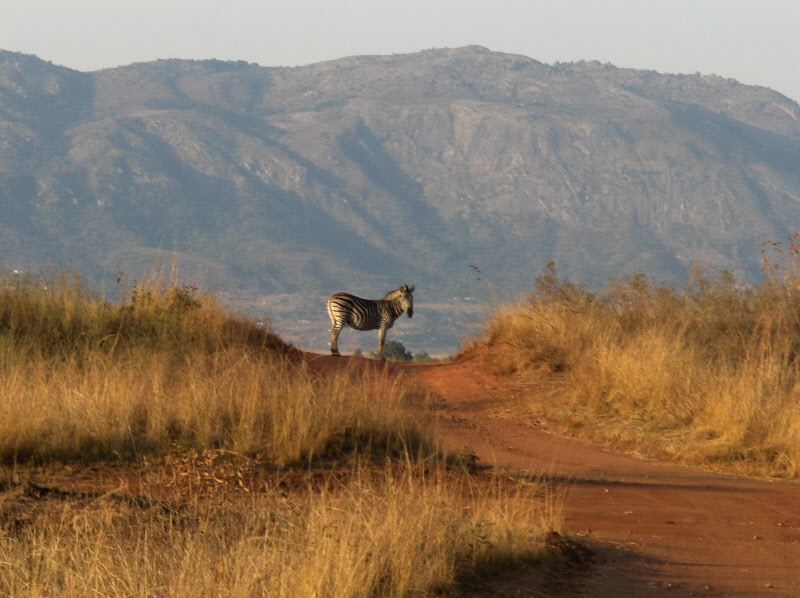 Backpacking in South-Africa - Swaziland - Mlilwane Wildlife Sanctuary