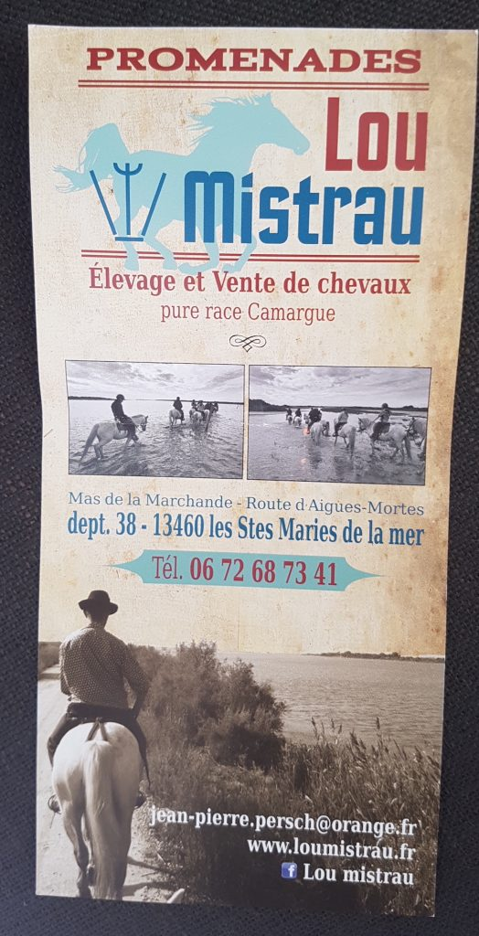 Camargue Horses - Camargue France